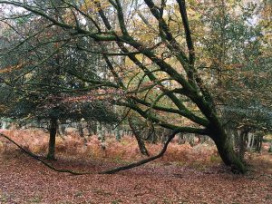 New Forest Writing for depression anxiety counselling